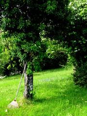 le verger de Cacahute (overthemoon) Tags: green cat schweiz switzerland spring suisse sunday memories peaceful orchard rake wildflowers svizzera mystreet printemps verger vevey vaud cacahute romandie catstory