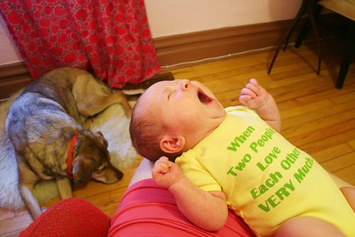 mid-yawn