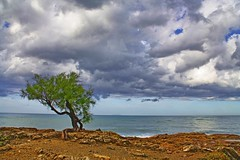 the last tree (paolo brunetti) Tags: sea sky cloud tree rain rock clouds mare cielo pioggia livorno vacanza isola scogliera romito gorgona calafuria antignano mareggiata nuvolo calignaia tamerici paololivorno