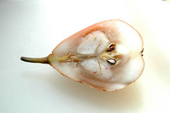 Pear (Eric Herot) Tags: food pear rotten culinaryart spoiledfood anjou overripe rottenfood