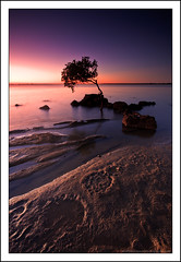Do you find me sadistic? You know, Kiddo, I'd like to believe that you're aware enough even now to know that there's nothing sadistic in my actions. At this moment, this is me at my most masochistic. (Matthew Stewart | Photographer) Tags: tree water sunrise matthew tide australia brisbane stewart qld incoming queensland deceptionbay