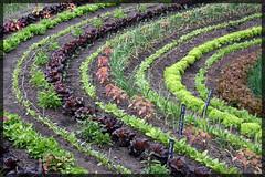 Eden - Salat