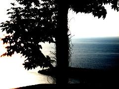 home love 2 (DBoel) Tags: ocean blue shadow tree turkey ivy blacksea karadeniz zonguldak