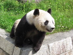 Oji panda 17.May.2010 011