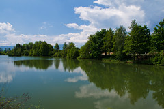 Above and below (Karmen Smolnikar) Tags: trees lake reflection nature water clouds slovenia slovenija