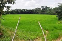 Pure Green (CAUT) Tags: southamerica countryside nikon colombia farm meta may mayo llanos 2010 finca d90 suramrica llanosorientales nikond90
