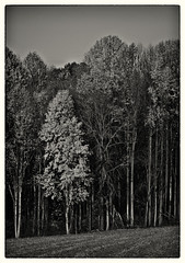 Random 03 Autumn Trees (c.huller) Tags: autumn trees bw random nik hdr lightroom silverefexpro2