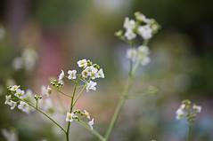 Mainau #12 (Schub@) Tags: flora pentax pflanze insel da blume bodensee smc 50200mm wr mainau badenwrttemberg k7 grnzeug justpentax pentaxart smcpentaxda50200mmf456edwr