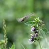 Ciuccia polline (nicolamarini79) Tags: beautifulmonsters