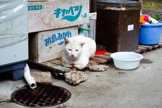Today's Cat@2011-06-18