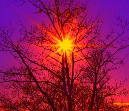 Tree Star of the Winter Sky