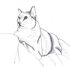 Katie Cat by Sydney Harper
