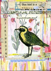 G is for the golden plover (sarah ahearn) Tags: art collage mixedmedia acryilic nahcottagallery enormoustinyartshow sarahahearn sarahearn