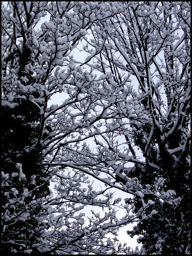Snowwww! 2nd feb16