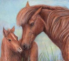 Beautiful day (Artist Victoria Watson) Tags: horses art drawings ponies wildponies animalart prisma petportraits horsedrawings equines horseart equineart chincoteagueponies ponydrawings drawingsbyhand prismadrawings wildhorseart