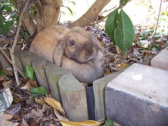 Can you see a rabbit hiding here? :) (PenguinHero) Tags: rabbit rabbits