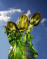 Bouquet di carciofi ... (Tati@) Tags: internationalwomensday 8marzo giornatainternazionaledelladonna