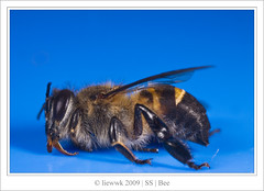 6.1 Bee ... going to death ??? ...
