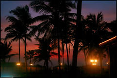 Coco Trees (garyclicks) Tags: travel light sunset wallpaper beach nature water beautiful night poster evening colorful goa scenic palmtrees beautifulsunset beautifulevening indianbeach colorfulclouds photoaward colorphotoaward sunsetwallpaper goanheritage thegoanheritageindia wallpapertravel