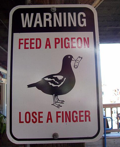 feed a pidgon