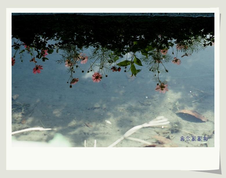 KODAK 250D電影底片(MZ-3+FA20&DFA100)花蓮瑞里隨拍