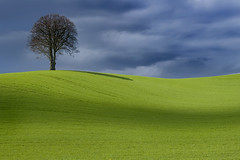 One Tree Hill Too (wentloog) Tags: uk wallpaper tree green wales canon landscape eos gallery britain hill cardiff lone 5d lonely wfc canoneos5d ef24105f4l wentloog welshflickrcymru stevegarrington