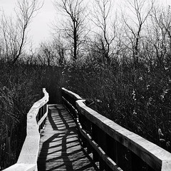 Garner Marsh Boardwalk