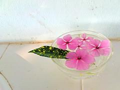 Pink Flower At Bath Tub / ดอกไม้สีชมพูในแก้วน้ำ