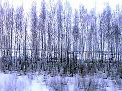 sbtrainb13 Siberian Railway Birch Trees, Russia 2000 (CanadaGood) Tags: morning blue white snow color colour tree dawn europe 2000 russia rail