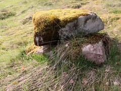 Together forever (:Linda:) Tags: two stone germany moss village thuringia moos brnn
