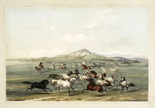 007- Caballos salvajes en la pradera-George Catlin 1845