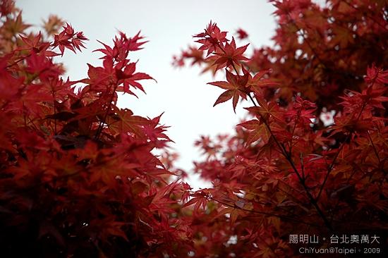 台北奧萬大。楓紅07