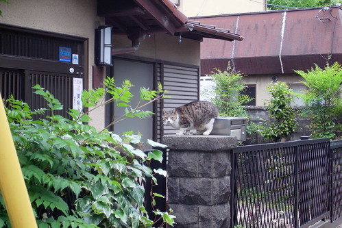 Today's Cat@20090523