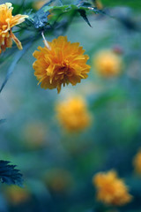 (ginnerobot) Tags: flowers orange nature yellow vertical outside spring focus pretty little bokeh blues circular
