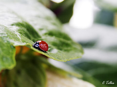 Passeando (Claudia Telles) Tags: flowers insetos insets flres platinumheartaward macrolife expressyourselfaward