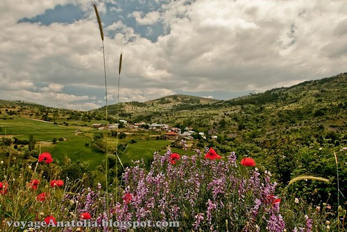 Flowers on the way to Karasar
