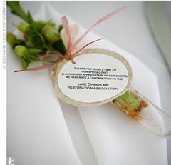 Lucky bamboo (The Weddings Page) Tags: green favour