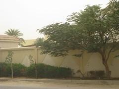 img_0242 (LovelyNatasha) Tags: dona qatar meloncholy sadism masochism