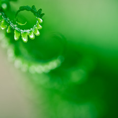 a measure of will ([Adam Baker]) Tags: life new fern green nature canon square spring bokeh minimal 5d cornell plantations adambaker blindpilot hbw 100mm28macro petob