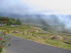 Bali, view (monskallentoft) Tags: bali mountain view fields batukaru