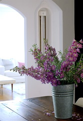 view from dining room. (sfgirlbybay) Tags: flowers bucket purple livingroom diningroom rosemary archway delphinium sfgirlbybay