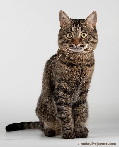 Всем поклонникам кота Пиндыка посвящается :) Pindo & Co (1)