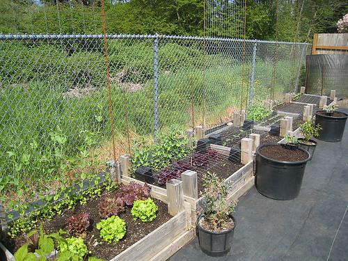 Vegetabke Garden May 16
