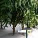 Vanilla Grove