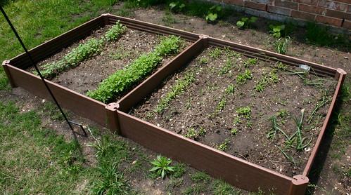 Garden @ 3 Weeks