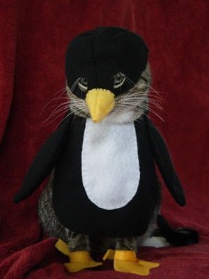penguin-cat