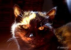 Maggy (doktorauge) Tags: cats cat w800 katze augen facetoface katzen blick augeinauge doktorauge