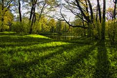 Shades on the green (dyadyavasya) Tags: park light tree water grass spring pond day russia foliage shade reflexion pushkin свет вода пруд россия весна дерево тень парк трава день отражение листва пушкин