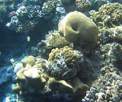 135_3574 (LarsVerket) Tags: egypt snorkling fisk undervannsfoto