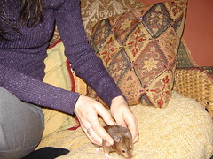 Prudie and Stephie (bleudreams) Tags: hamsters smallanimals